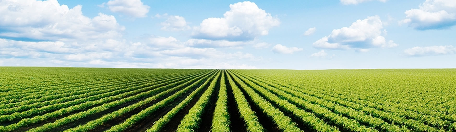AGRIBUSINESS SUPPORT SERVICES